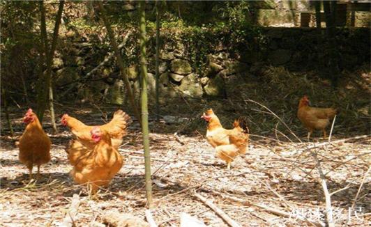 移民意大利之后,你可能都不知道如何在超市挑选鸡蛋!