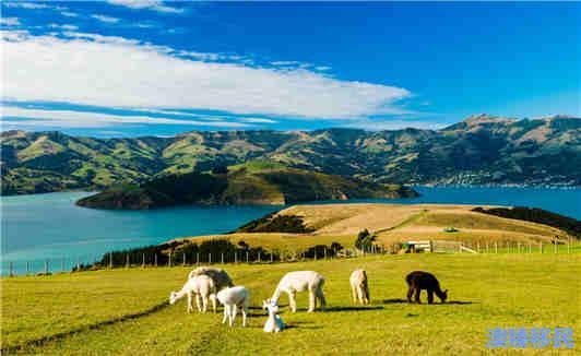 不要再问我为什么移民新西兰这个遍地牛羊的国家了 (1).jpg